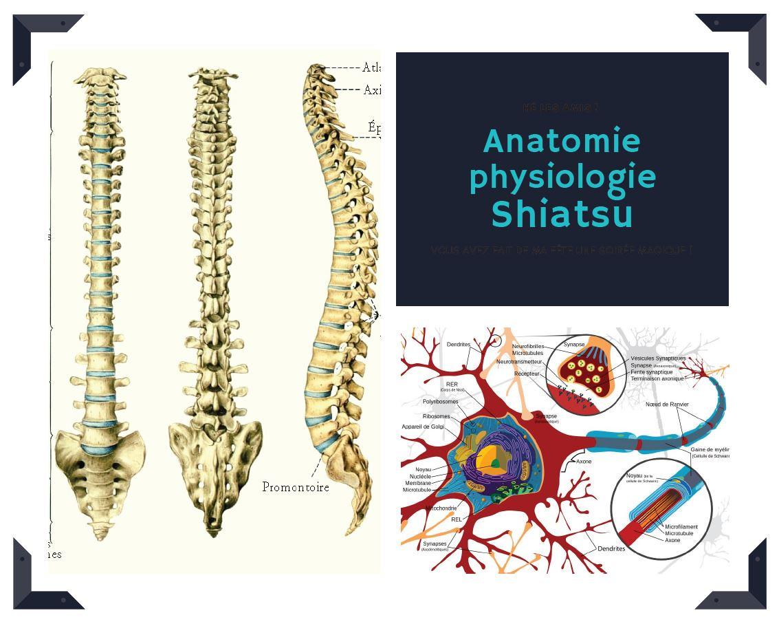 Formation à distance: Anatomie physiologie shiatsu